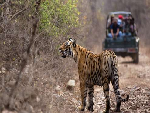 Wildlife package at Ranthambore | 2 Nights / 3 Days